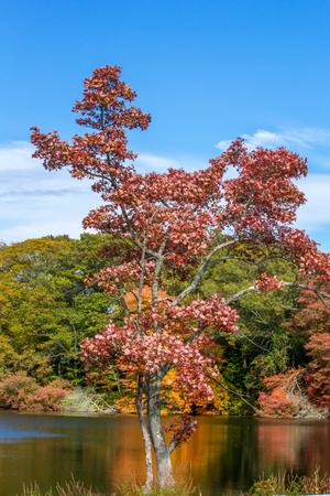 Autumn color in Rhode Island