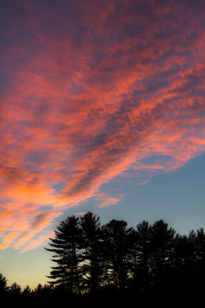 silhouetted trees under sunset sky in New Hampshire Banco de Imagens