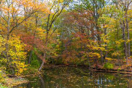 River full of fallen leave during fall foliage in New England Banco de Imagens