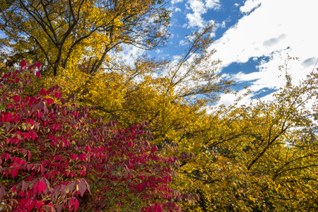 Fall Foliage at Hunts Mill in seekonk.  Red and yellow branches
