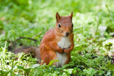 Small Squirrel Stock Photo