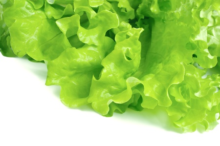 leaf fresh lettuce isolated on white background photo