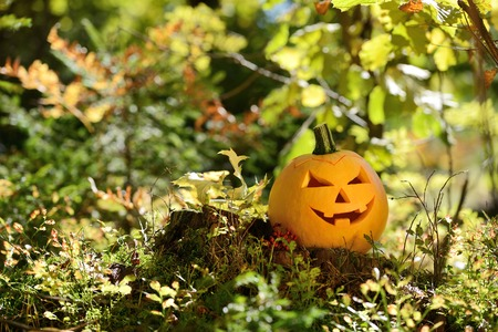 Halloween scary pumpkin with a smile in autumn forest photo