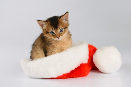 Merry Christmas Baby Cat with Santa hat on white background photo