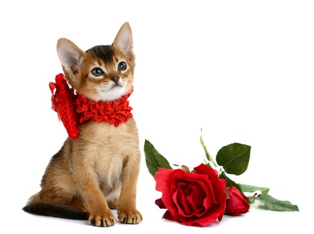 Valentine theme kitten with red heart and rose isolated on white background Stock Photo