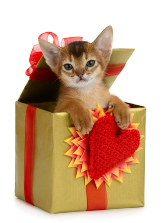 Valentine theme kitten in a present box with red heart isolated on white background Zdjęcie Seryjne