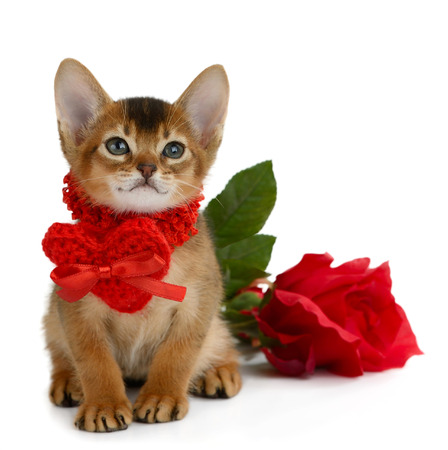 Valentine theme kitten with red heart and rose isolated on white background photo