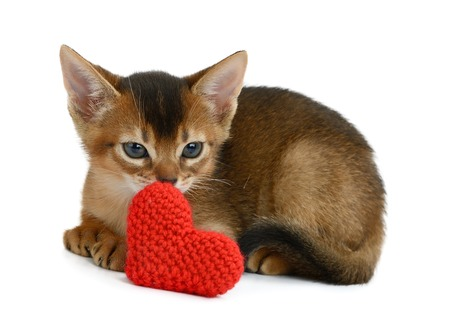Valentine theme kitten with red heart isolated on white background Stock Photo