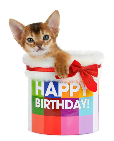 Kitten sitting in a Happy Birthday bucket isolated on white background