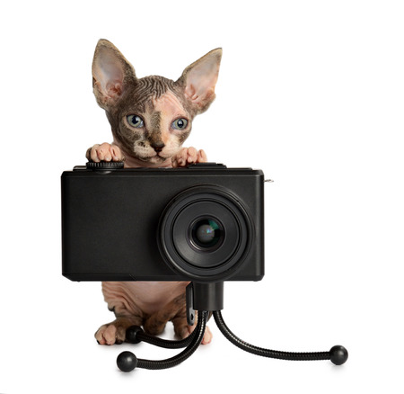 The Canadian hairless sphynx with camera isolated on white background