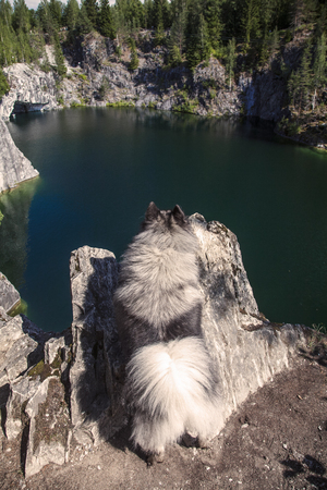 keeshond on his hind legs looks at a mountain lake Stock Photo