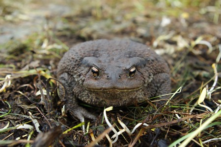 sitting on the ground: Toad sitting on the ground during the day Stock Photo