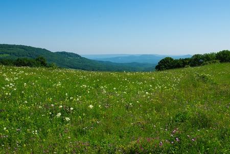 savio: Alpine meadow in the morning. Caucasus mountains