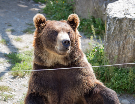The brown bear sits in the zoo in the daytime