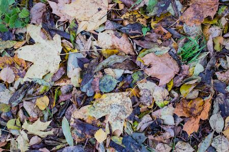 Autumn leaves in the woods day time Stok Fotoğraf