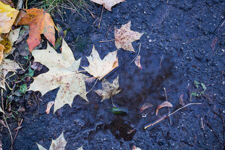 Yellow maple leaf on the old asphalt in the daytime Imagens