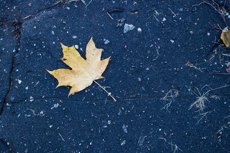 Yellow maple leaf on the old asphalt in the daytime Banque d'images - 132126038