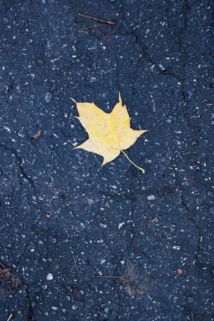 Yellow maple leaf on the old asphalt in the daytime Banque d'images - 132123862