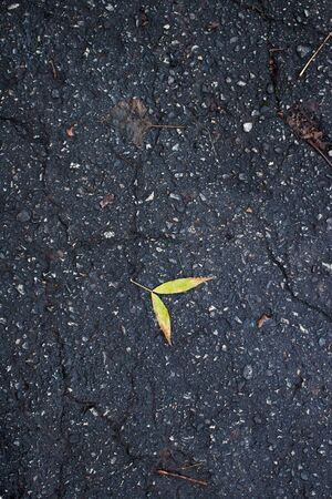 Yellow maple leaf on the old asphalt in the daytime Banque d'images - 132126289