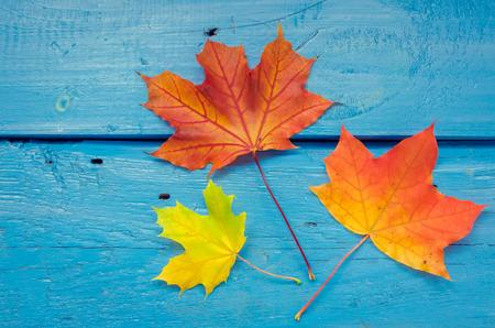 Jesień tło z kolorowych jesiennych liści klonu na niebieskim rustykalnym drewnianym stole z miejscem na tekst. Koncepcja tło wakacje dziękczynienia jesień. Rama z jesiennych liści. Skopiuj miejsce. Widok z góry. Zdjęcie Seryjne