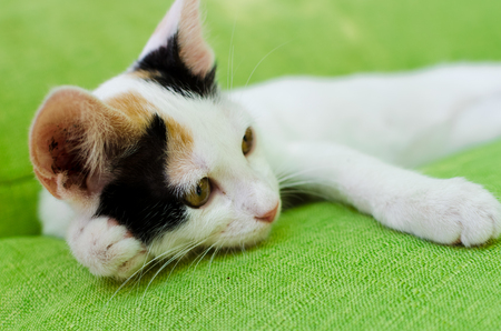 Young cute white cat with black and red spots resting on a green couch. Playful domestic cat on a bed. Stock fotó
