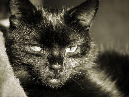 gatto  Archivio Fotografico