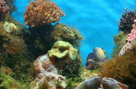 beautiful aquarium Stock Photo - 3800298
