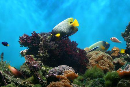 beautiful aquarium photo