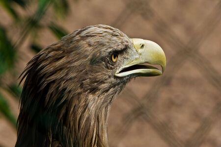 majestic eagle photo