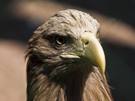 majestic eagle on black background Stock Photo - 5115409