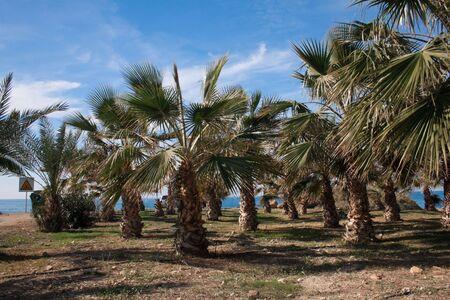 oasi di alberi di Palma Archivio Fotografico