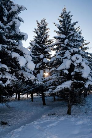 Snow-covered nature. Winter day