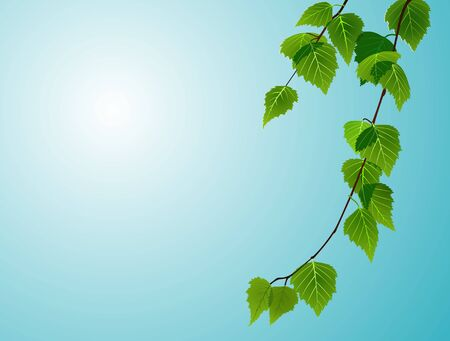 compostion: birch foliage on blue sky background Illustration
