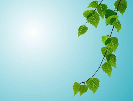 birch foliage on blue sky background Illustration