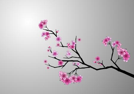 fleur cerisier: Japonais cherry blossom  Illustration