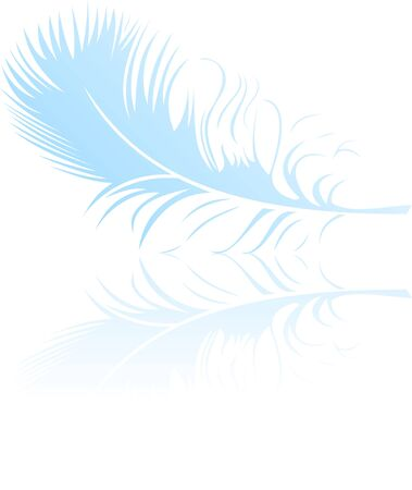 Beautiful feather  Vector