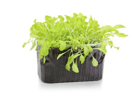 salad in a container isolated