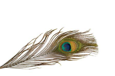 Pluma de pavo real sobre fondo blanco. De cerca