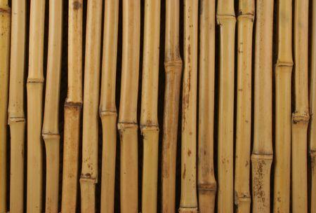 Closeup of a wall of natural bamboo. photo