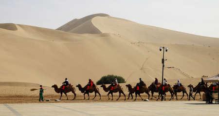 camels as a main form of transportation in desert Foto de archivo