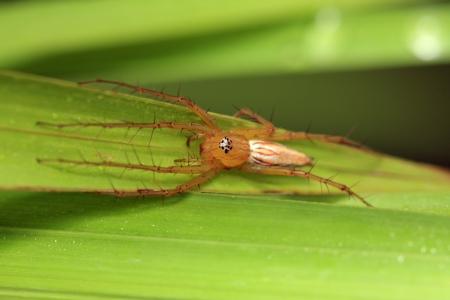 hexapod: Spider