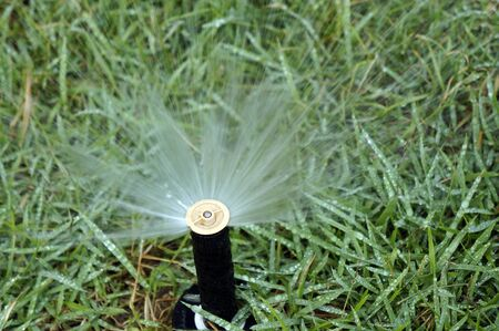 Working sprinkler in the lawn