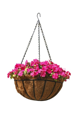 Hanging basket of beautiful flowers isolated on white Stock Photo