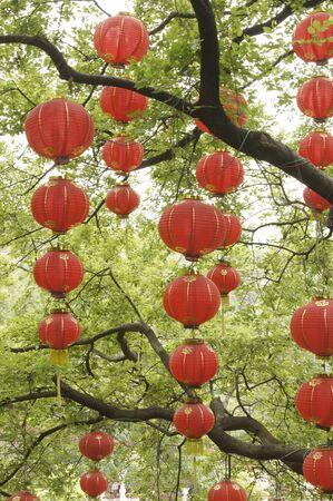 Red lanterns hanging on green tree
