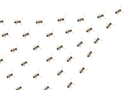 conspire: Team of ants Stock Photo
