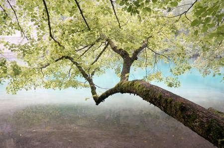 Green tree beside water