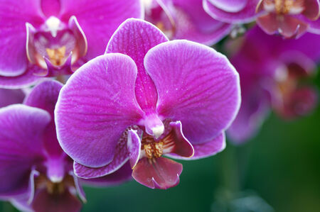 Beautiful orchids photo