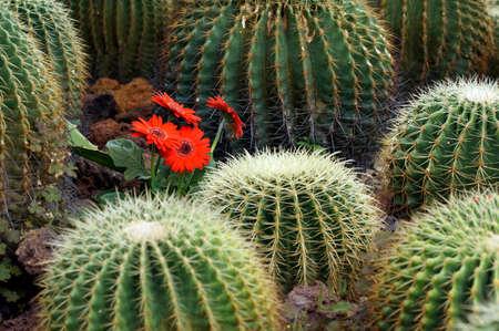 Flower among cactus
