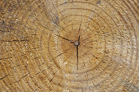 Wood tree rings background