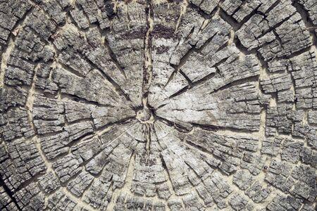 textuur van het hout Stockfoto